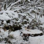 В Самарской области с 1 декабря будет усилено патрулирование леса